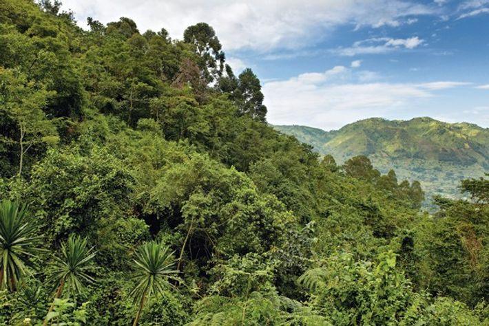 Greenery in Uganda