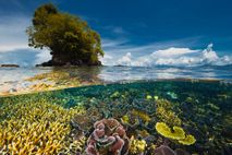 A nearby peninsula protects a garden of delicate coral from storms in Kimbe Bay, New Britain ...
