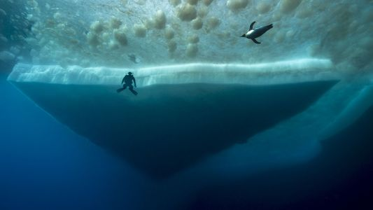 Mysterious Deep-Sea Life Below Antarctica
