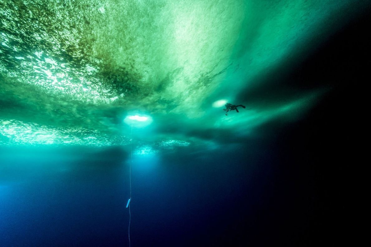 A diver swims beneath several feet of Antarctic ice. The rope hanging nearby helps divers find ...