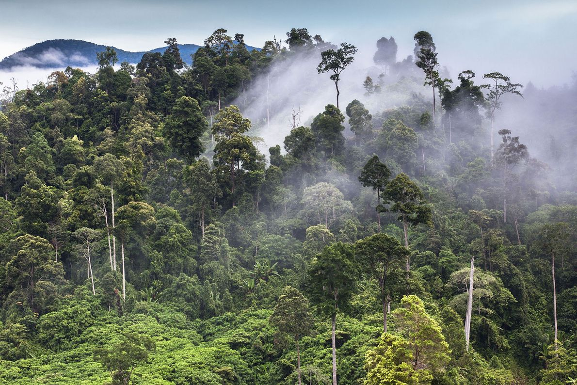 Tropical Rain Forest Heritage of Sumatra, Indonesia