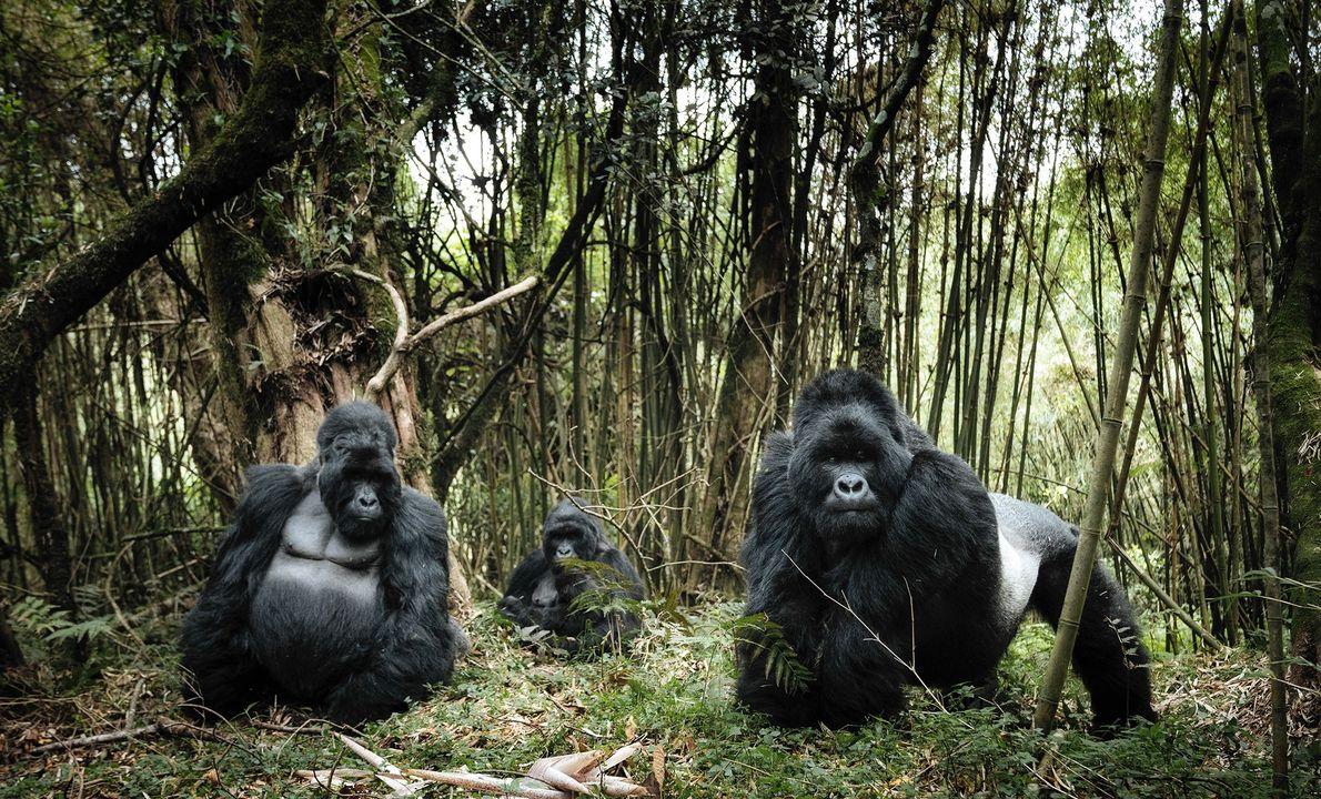 Virunga National Park, Democratic Republic of Congo