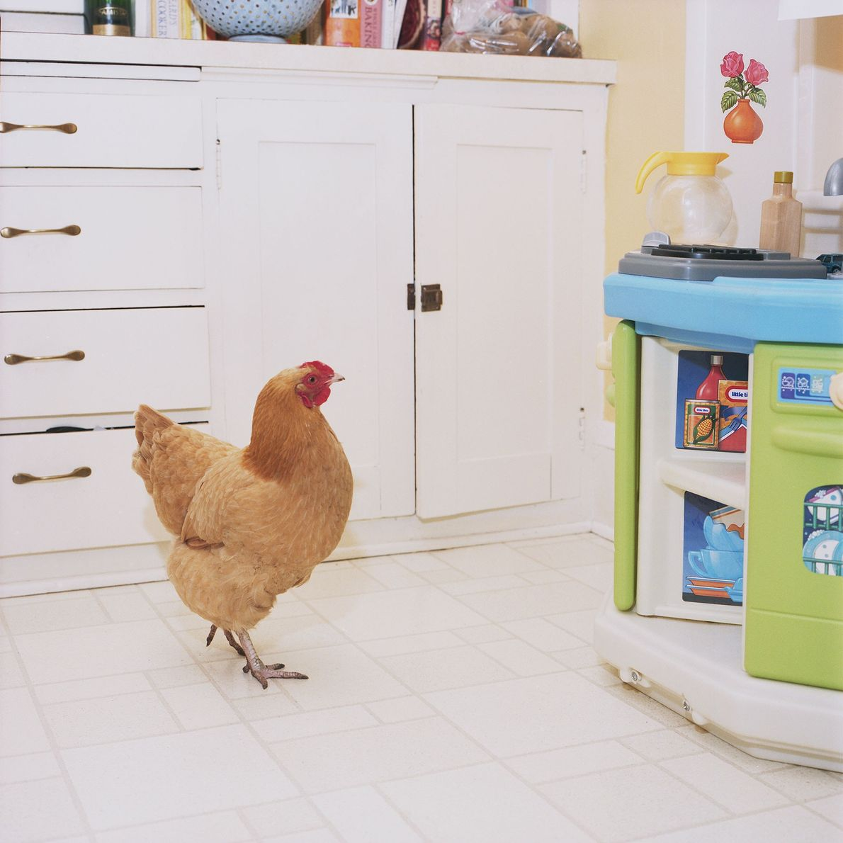 """Hickety (seen roaming her kitchen) was kept partly for eggs, """"but her owners showed great affection ..."""