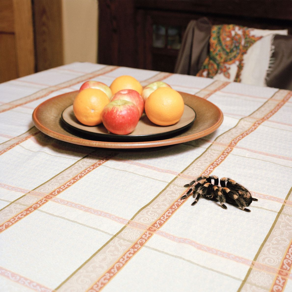 """Josephine Houdini adds a splash of colour to the kitchen table. """"She was so named because ..."""