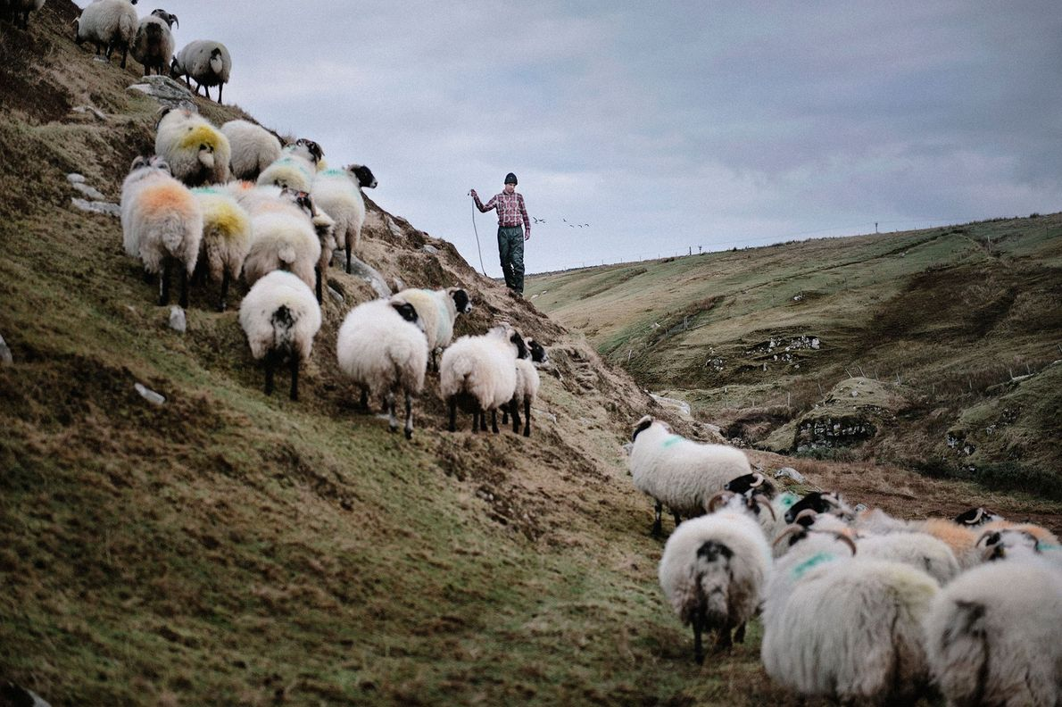 Scott MacRury, 28, has a small farm called a croft on the Isle of Lewis. When ...