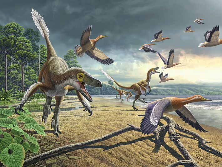 Did dinosaurs like these dromaeosaurs dine on ancient duck relatives in Antarctica? The frozen continent was ...