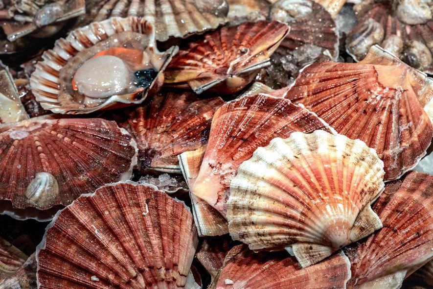 Across the Rialto Bridge, visitors can find a bustling fish market.