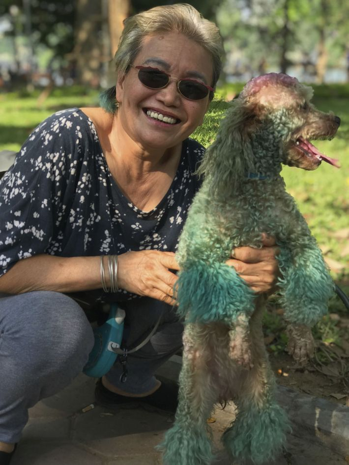 Pet poodle with dip-dye hairdo to match its owner's