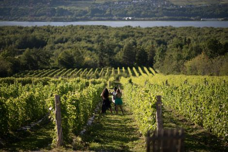 Vignoble Isle de Bacchus near the village of Saint-Pierre on Île d'Orléans, is one of the ...
