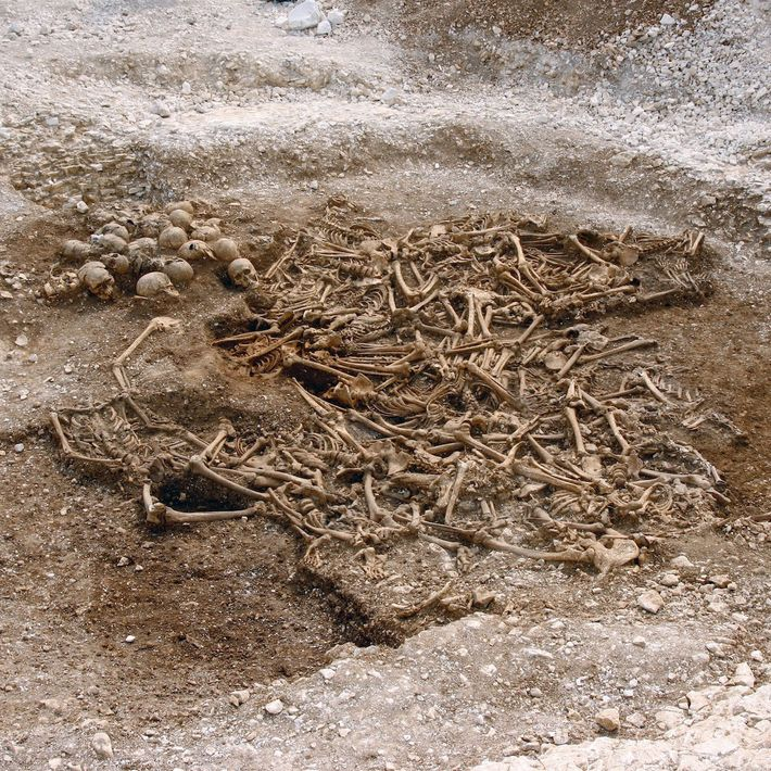 A mass grave of around 50 headless Vikings from a site in Dorset, UK. Some of ...