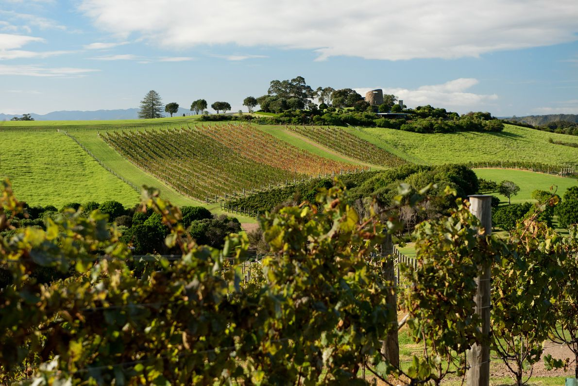 With 10 diverse wine regions around New Zealand, there is even a Wine Trail you can ...