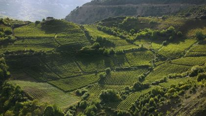 Experience the wonders of Greek wine where it's produced