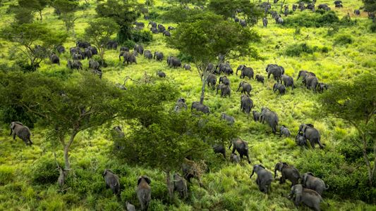 Elephants return to conflict-ridden national park