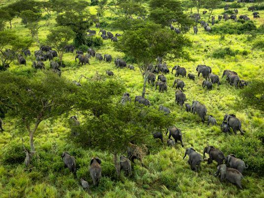 Elephants return to conflict-ridden national park