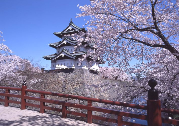 Hirosaki Park, which boastssome 2,600 cherry trees,is one of the best cherry blossom spots in Japan.