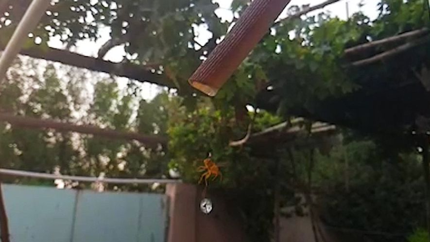 Wasps Need Water, Too. Watch One Drink in Mesmerising Slow Motion