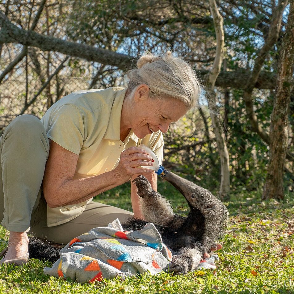 Meet the adventurer: conservationist Kristine Tompkins on reviving the wilds of Chile and Argentina
