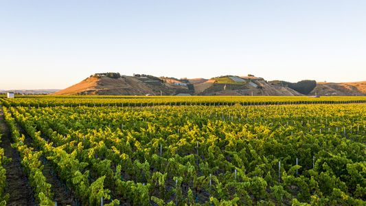 A culinary guide to Hawke's Bay, the heart of New Zealand's wine country