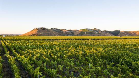 Smith & Sheth vineyard.