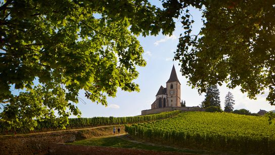 Vines surround a church in Alsace.