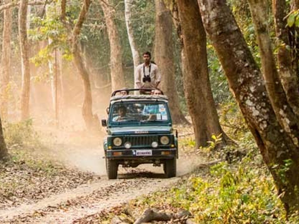 India: On the lookout for the one-horned rhinoceros
