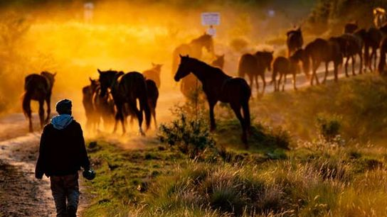 A dramatic shot of the horse herd in Drakensberg
