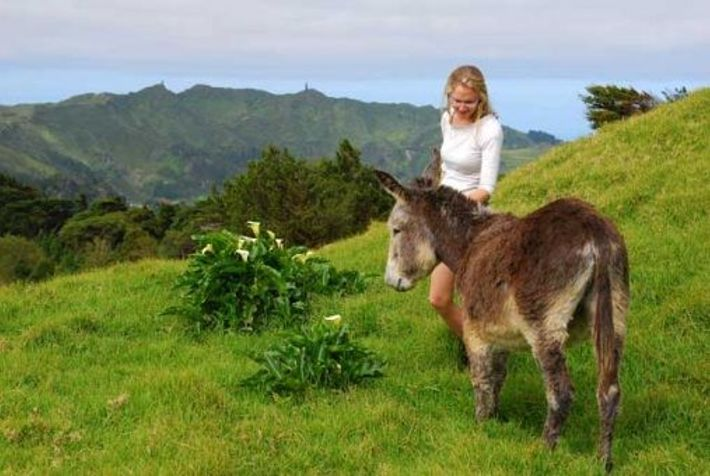 Meeting one of the island's four-legged residents at High Peak