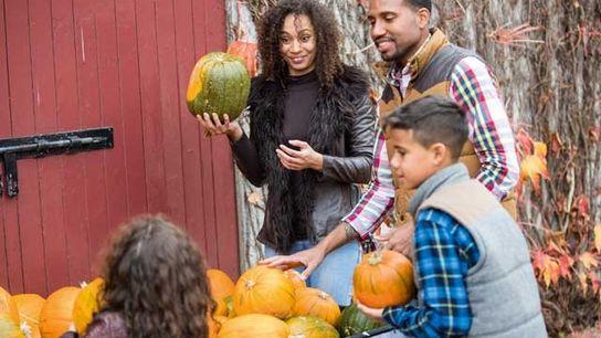 Pumpkins at Castle Ward.