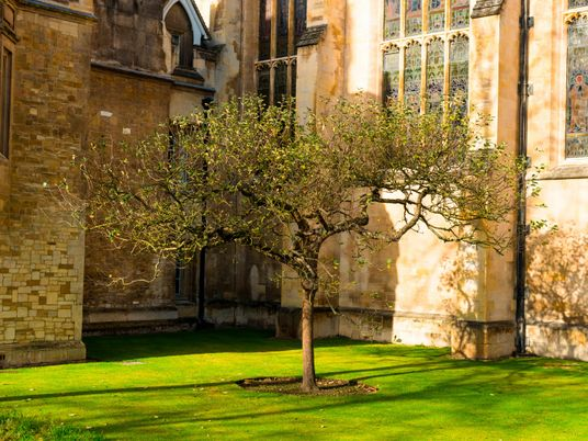 Six of the UK's historic trees and their curious stories