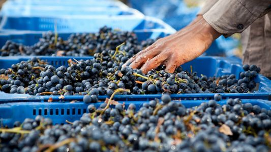 Wine for winter: picking the perfect malbec
