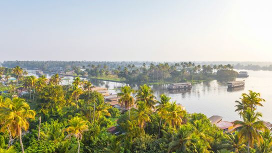 Morning mist lingers over Kerala's verdant backwaters, where kettuvallams are moored at the palm-fringed edges.