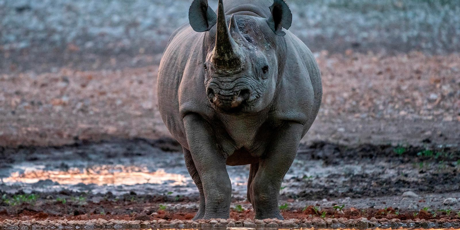 Learning to protect Namibia's endangered rhinos on a new conservation bootcamp