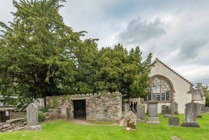 Fortingall Yew in Scotland