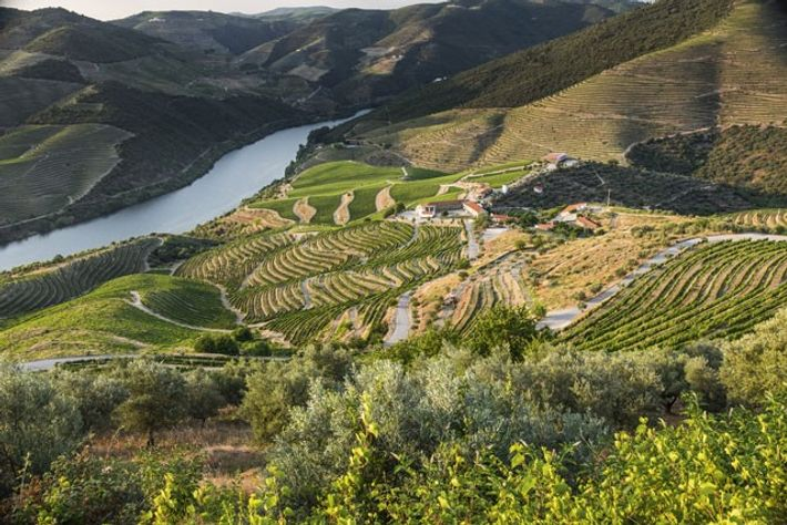 Terraced vineyards of the Douro Valley.