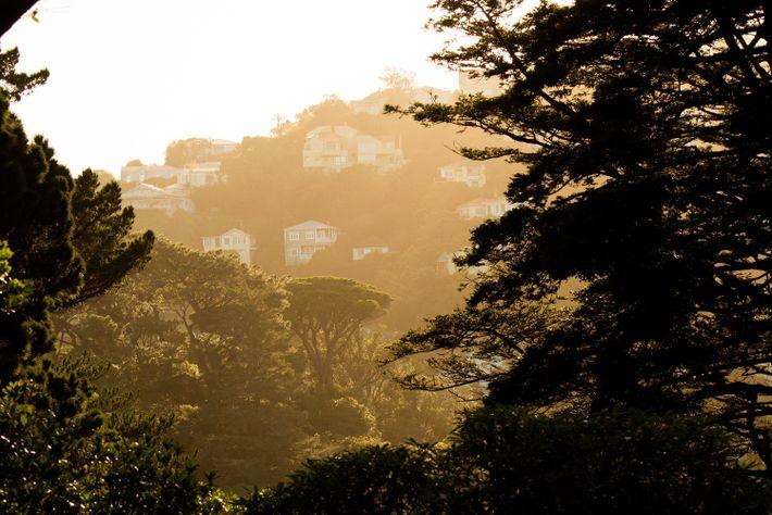 In Kelburn, a suburb of Wellington, you can explore a duck pond, an award-winning rose garden, ...