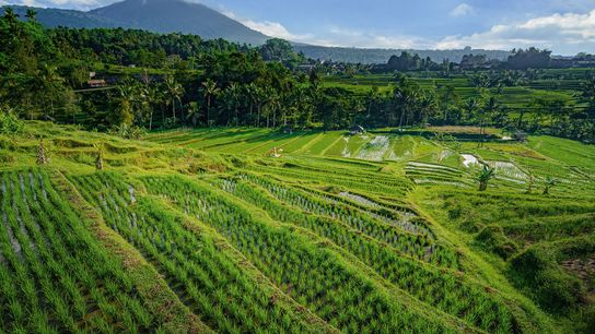 Stunning vista across Jatiluwih Rice Terrace,Bali.