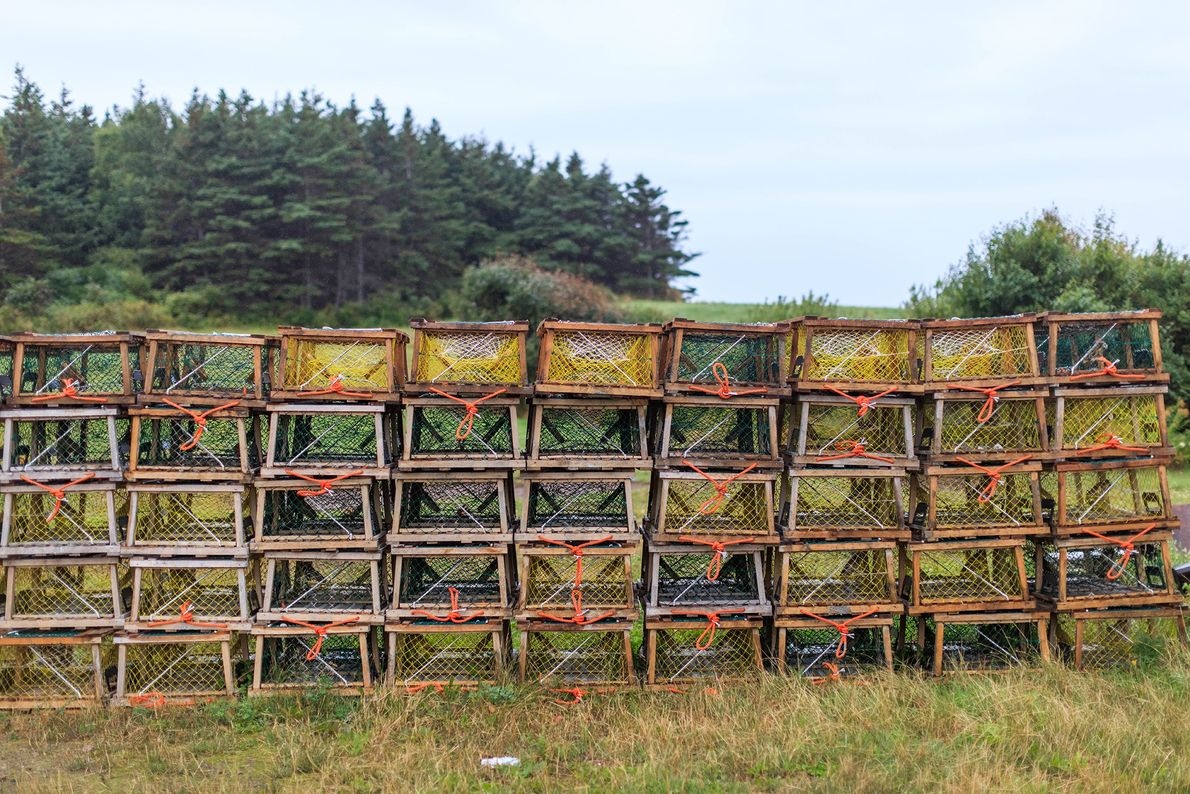 Stacked cages seen near Whale Cove hint at the authentic, traditional lifestyle in Margaree Harbour, a ...