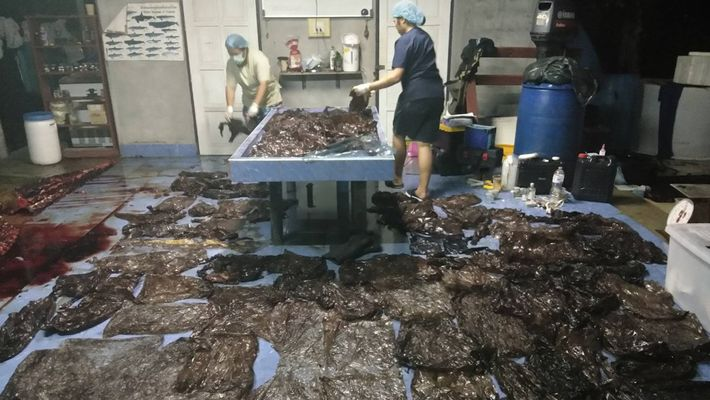 17 Pounds of Plastic Waste Kills Pilot Whale