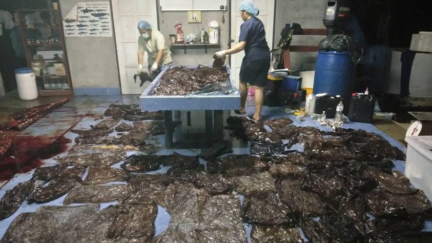 17 Pounds of Plastic Waste Kills Pilot Whale