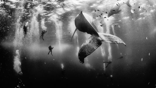 How Winning a Photo Contest Changed This Photographer's Life