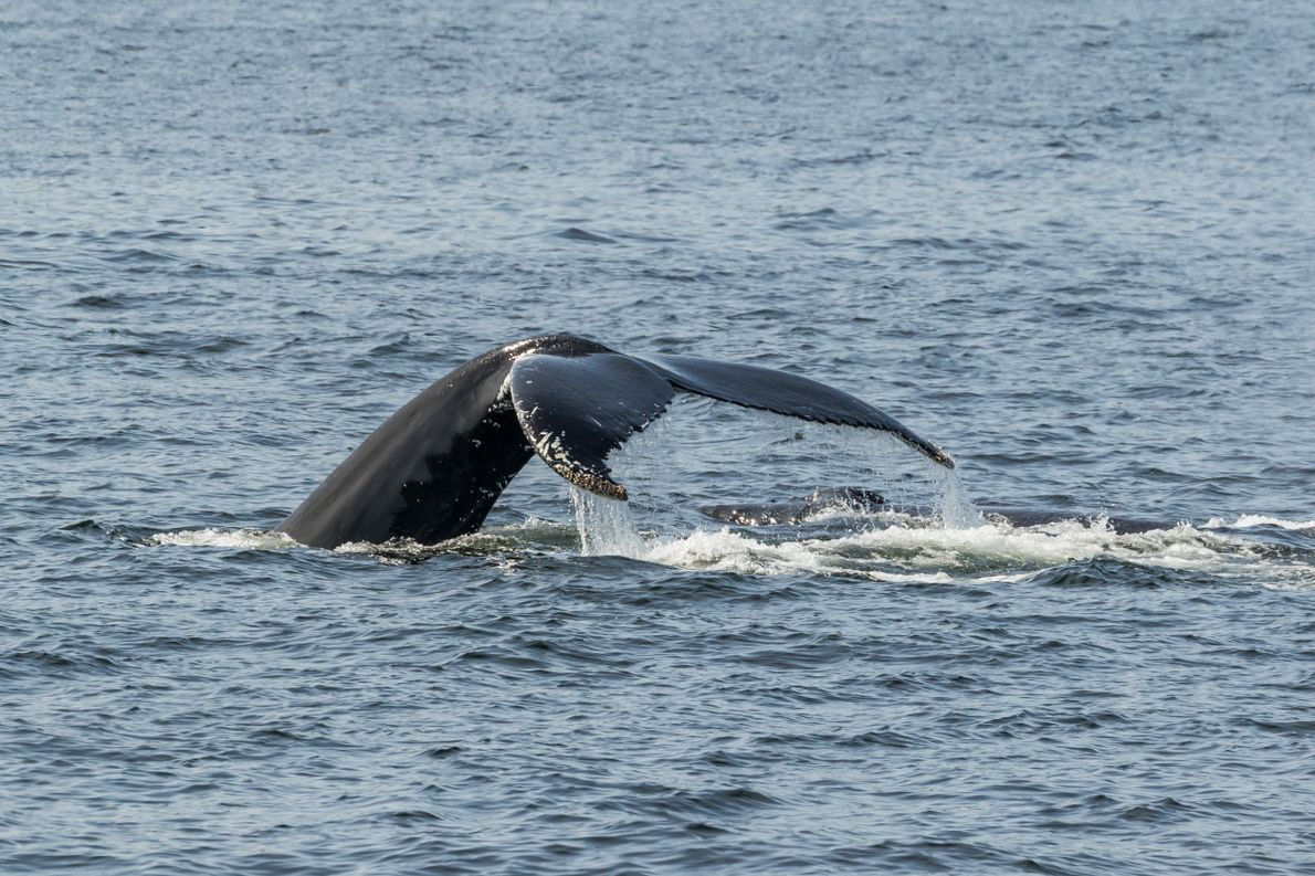 Whale sightings are common on the road trip from Tadoussac to Kegaska.