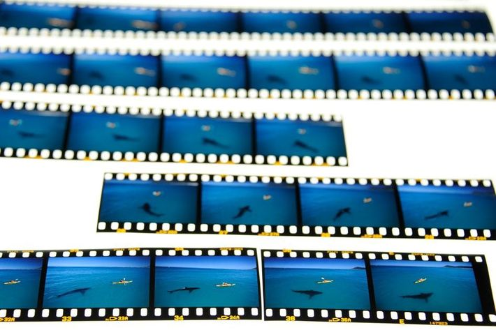 A developed roll of slide film shows the moments leading up to the picture photographer Tom ...