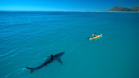 How the Ultimate Shark Photo Went Viral