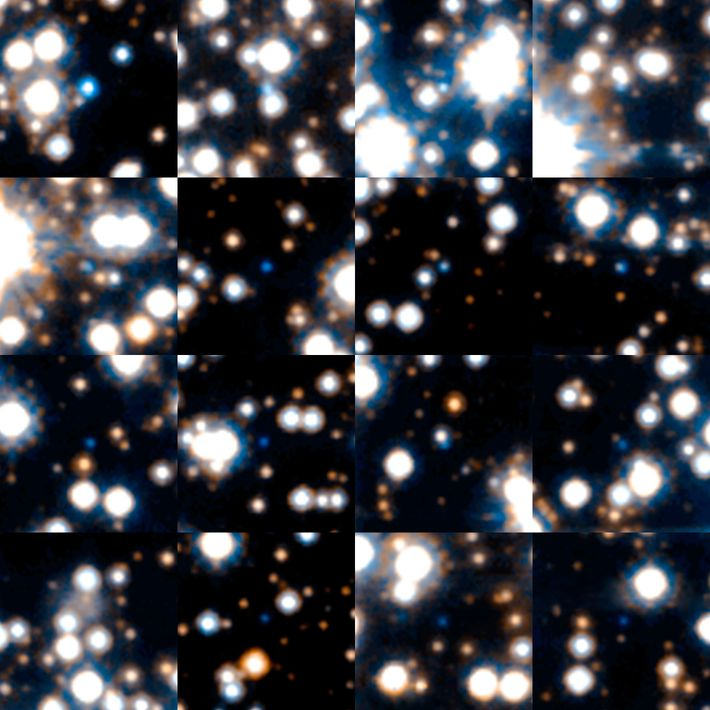 These white dwarf stars were imaged during an astronomical survey conducted by NASA's Hubble Space Telescope ...
