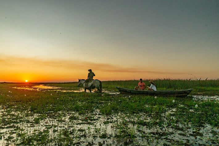 Horse-drawn canoes are a traditional way of getting around Iberá National Park, and a great way for travellers ...