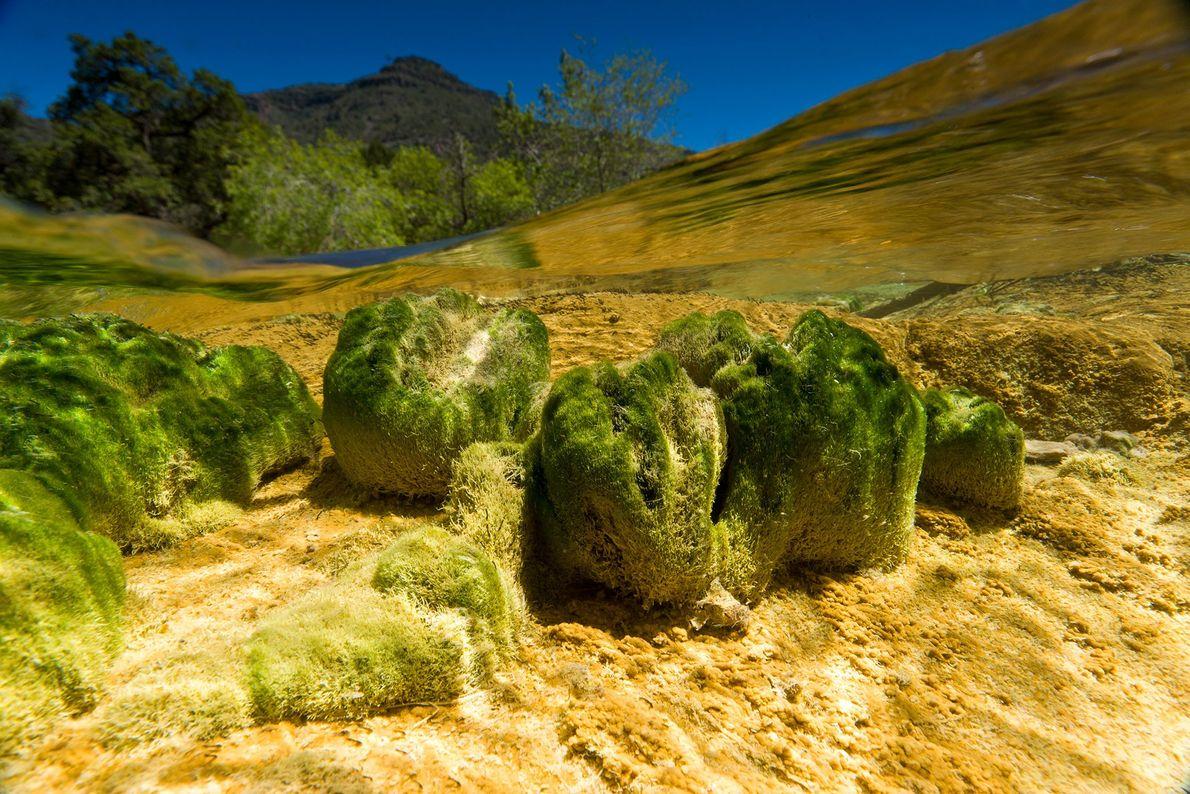 Fossil Creek, Arizona