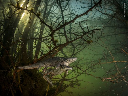 See the winning images from Wildlife Photographer of the Year