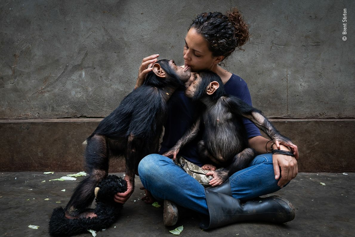 Itsaso Vélez del Burgo, director of Lwiro Primates Rehabilitation Center in South Africa, introduces a young, ...