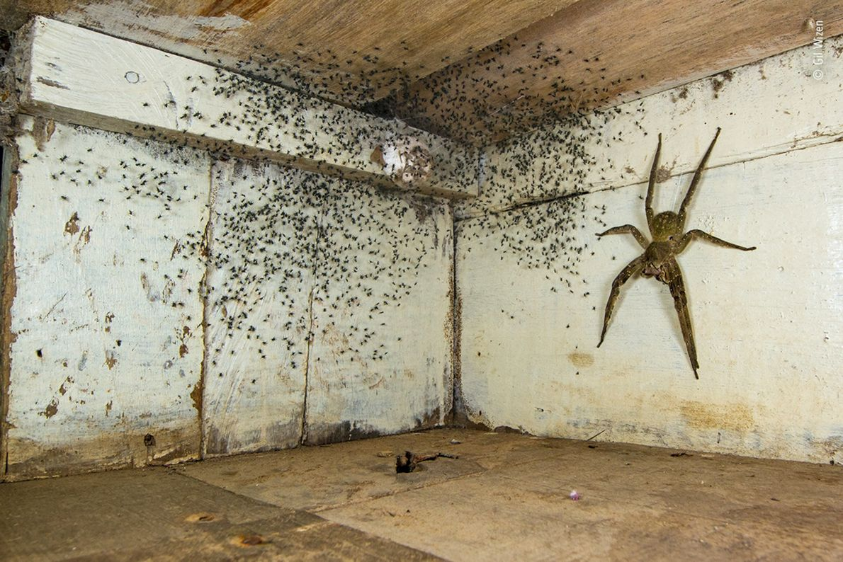 After noticing tiny spiders all over his bedroom in Brazil, Israeli-Canadian photographer Gil Wizen looked under ...