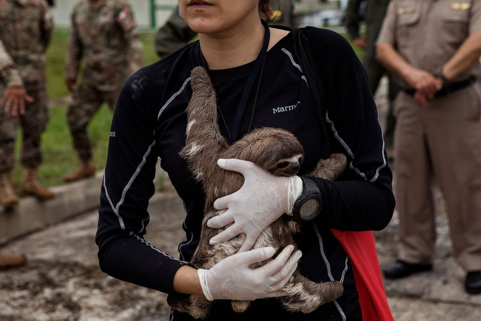Sloths, manatee, other wildlife rescued from Amazon tourism trade